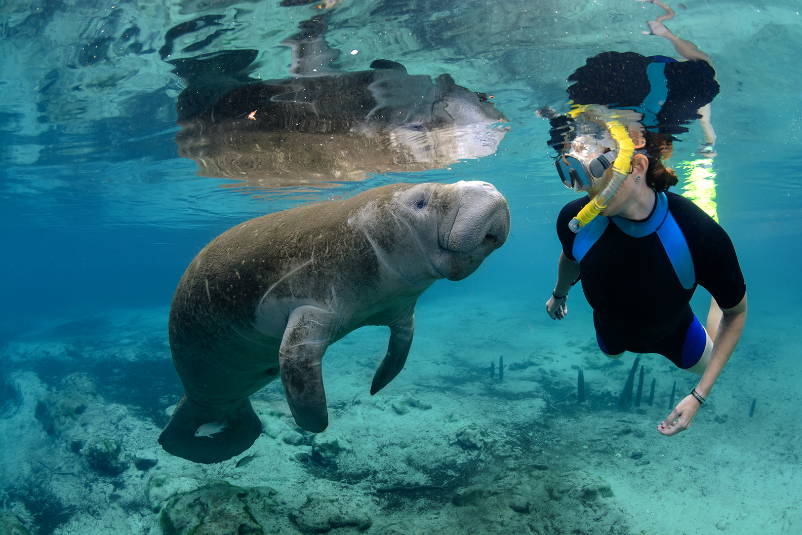 Best Crystal River Manatee Tour